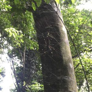 Aranya al Parc Nacional Corcovado