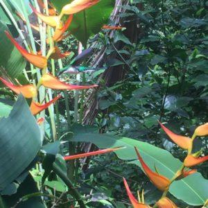 Colibrí al Parc Nacional Manuel Antonio, Costa Rica