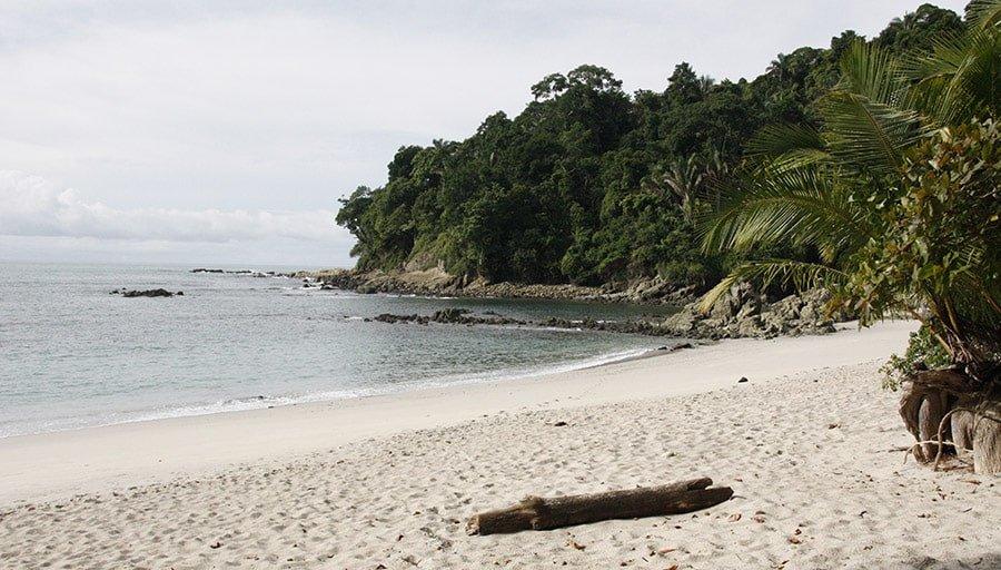 Manuel Antonio: Coneixent la fauna de Costa Rica