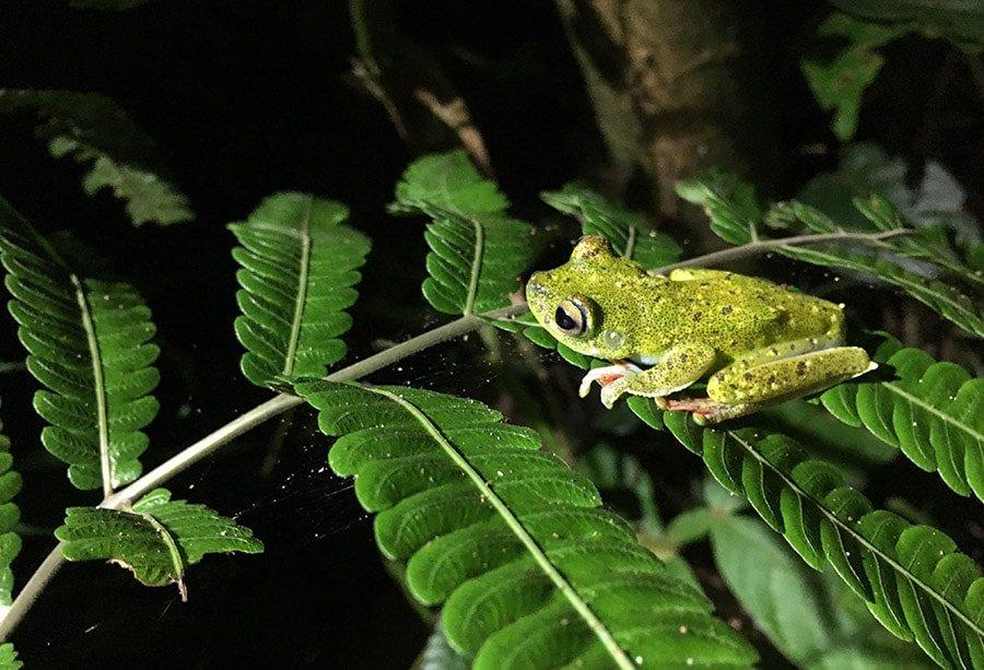 Sarapiquí: Última aventura a Costa Rica