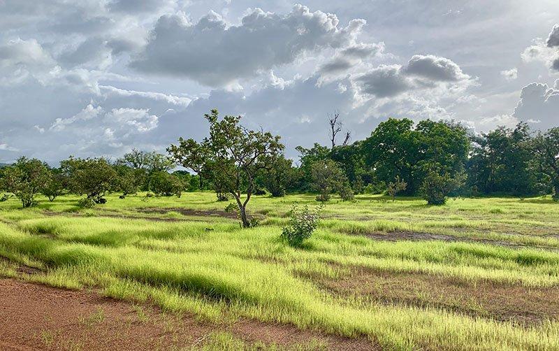 Camí al campament Tako Mayo, al País Bassari