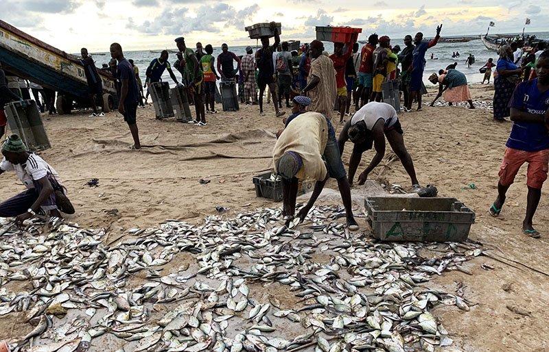Pescadors recollint i venent el peix a Kafountine